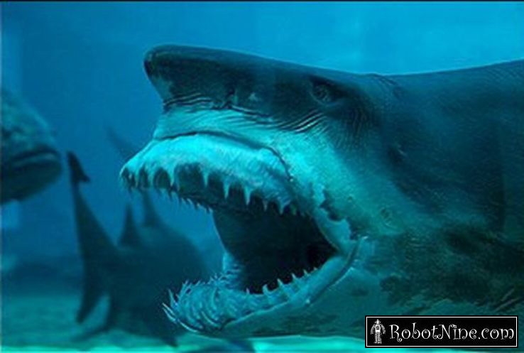 What in the hell kind of an animal can open their mouthful of razor    Worlds Scariest Shark