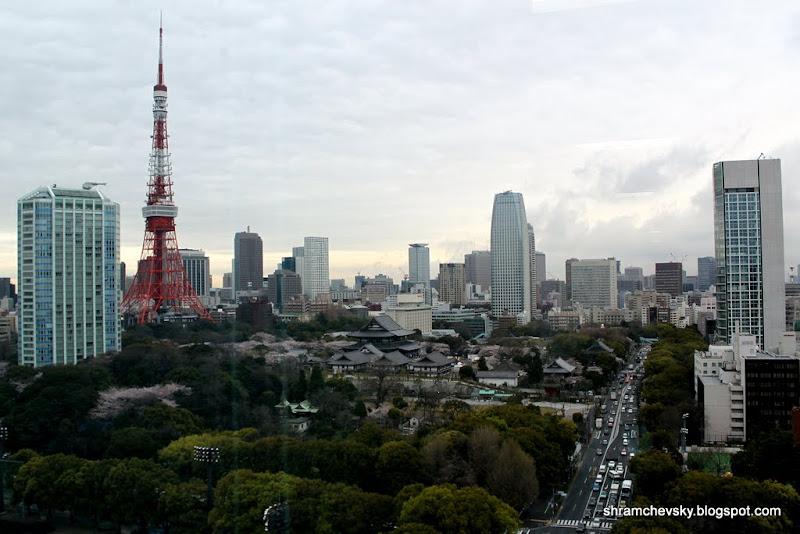 Япония Минато Токио Сакура Цветет Телебашня Цветы Весна Шибакоен Минато Japan Minato Sakura Spring Shibakoen Cherry Blossom Tokyo Tower
