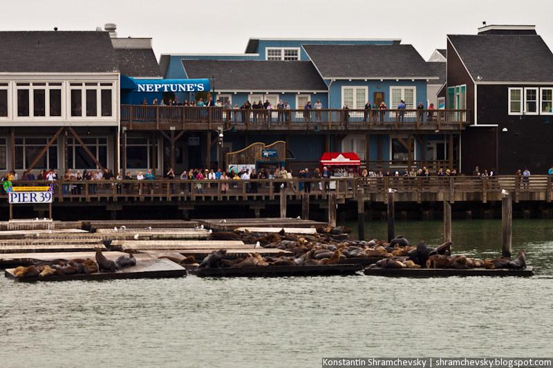 USA California San Francisco Seals США Калифорния Сан Франциско Морские Котики