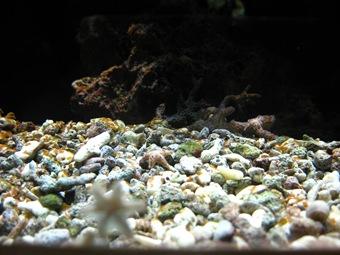 Aquarium 34