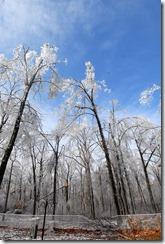 icestormtrees