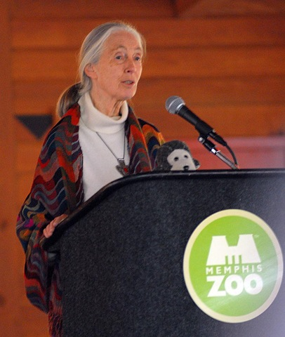 janegoodall as luck would have