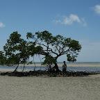 Mangrove auf sehr breitem Strand, da sprang unser Auto nicht mehr an.