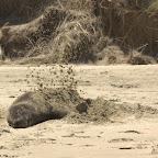 Zum Sonnenschutz gibts noch eine Schicht Sand aufs Fell