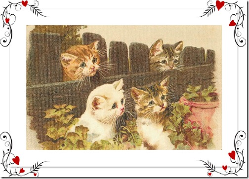 kitties by fence
