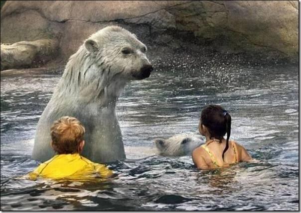 Crianças nadando com os ursos polares (2)