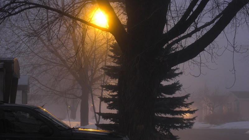 Foggy Evening Jan 31 2010_1858Foggy Evening Jan 31 2010Compressed