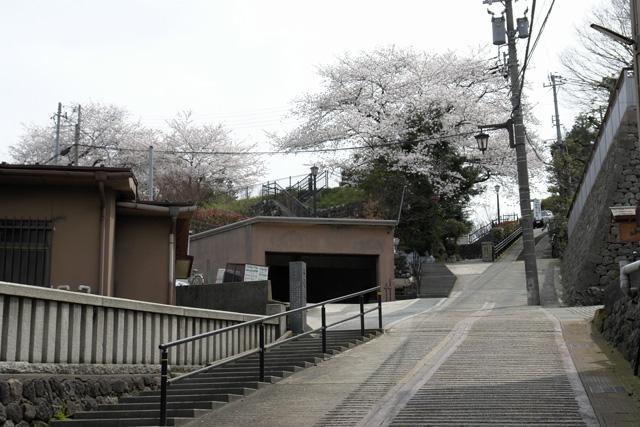 金沢 桜満開 その3 卯辰山 摩利支天