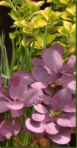 flores de abril 2010001