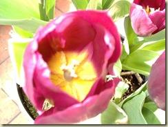 Primavera 2006 002