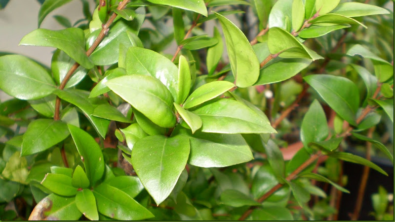 marzo 2011 y botanico 015