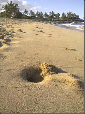 walk on the beach Droid 015