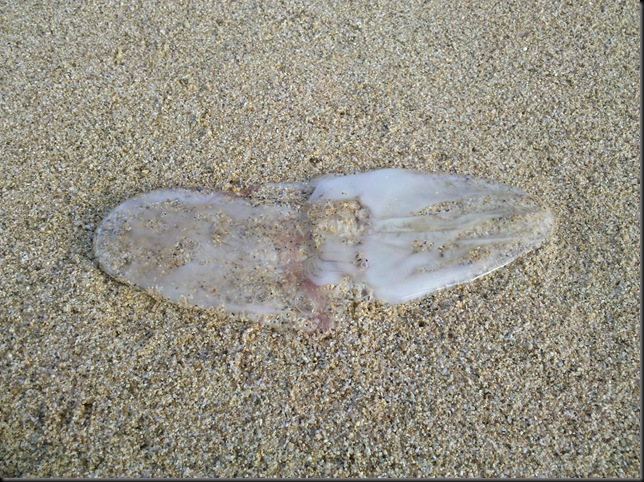 walk on the beach Droid 034