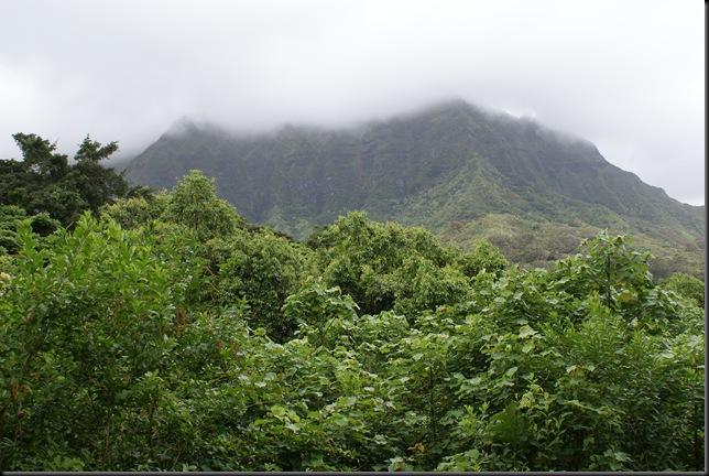 Maunawili hike 110