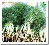 baby fennel migliorelli
