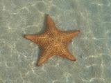 Estrella del Mar