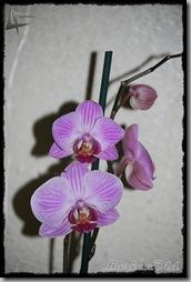 Orquidea (2)
