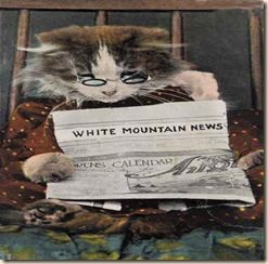 cat_reading_newspaper
