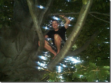 bluff tree2