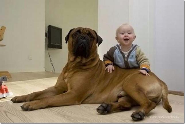 1 - niños con perros misimagenesdivertidas  (17)