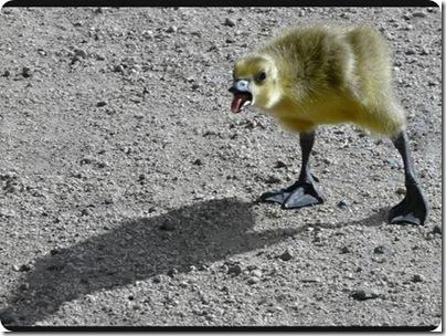 aves divertidas (8)