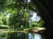A descer o rio na floresta jamaicana