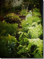 jamie olivers garden from Jamie At Home 001