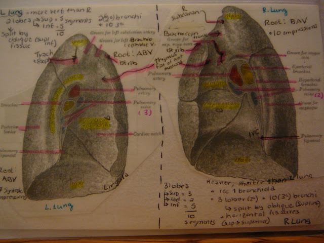 Lung - Parts, Impressions