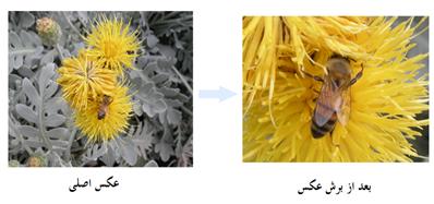گل و زنبور - نحوه برش عکس