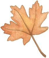 HW Leaf4-715120