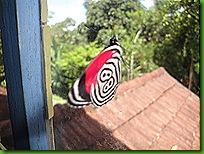 borboleta 88 001