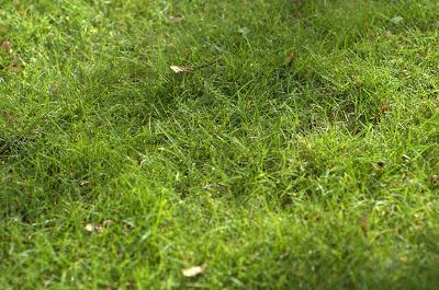 grassy sunny lovely