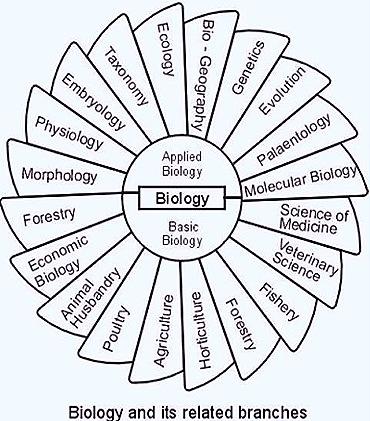 branchesof-biology