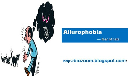 ailurophobia1