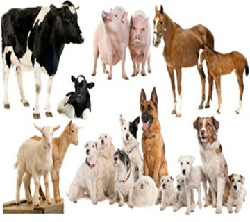 animal-breeding