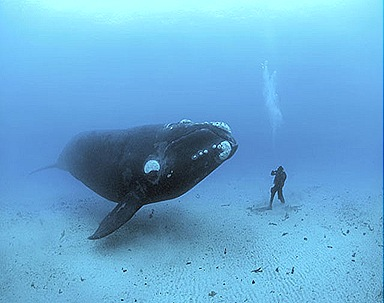 blue-whale-largest-animal