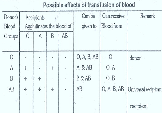 blood-groups-transfusion