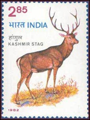 Kashmir_Stag