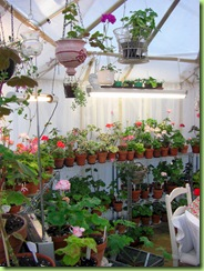 Blomster og drivhus mai 09 008