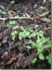Blomster og drivhus mai 09 009