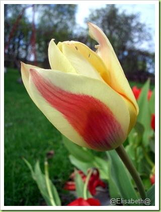 Blomster og drivhus mai 09 003