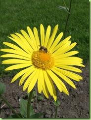 Botanisk have 7 juni 09 008