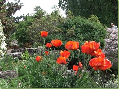 Botanisk have 7 juni 09 023