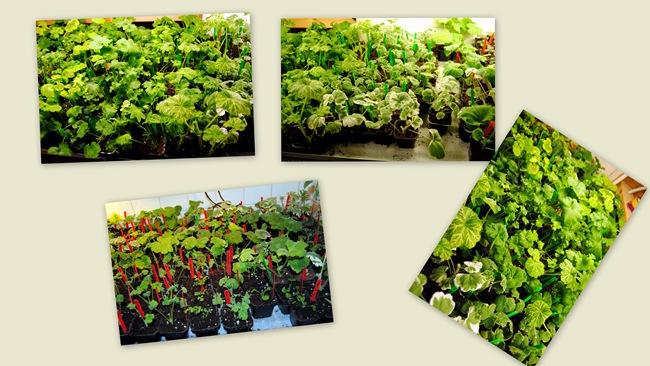 2011-02-12 Bloggbilder 2011