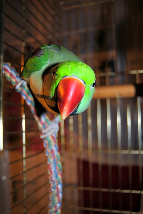 Bloggbilder 2011 006