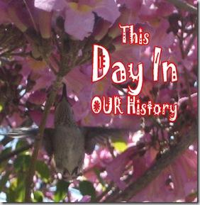 DIH - HummingBird