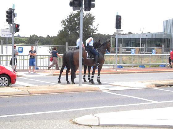 Horses turning right