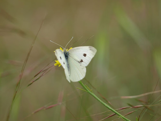 butterfly by belles