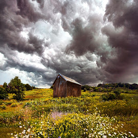 Storms of Bygone Summer Days by Phil Koch - Landscapes Prairies, Meadows & Fields ( vertical, yellow, storm, leaves, wicounties, love, sky, tree, nature, autumn, weather, flower, orange, twilight, agriculture, horizon, portrait, gate, dawn, serene, trees, floral, natural light, cabin, wisconsin, ray, landscape, phil koch, sun, photography, horizons, severe, clouds, office, extreme, park, green, scenic, morning, shadows, wild flowers, field, red, fog, blue, sunset, peace, fall, meadow, summer, beam, sunrise, landscapes, mist,  )