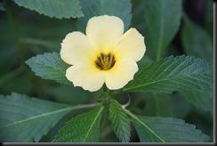 Flora BM 010